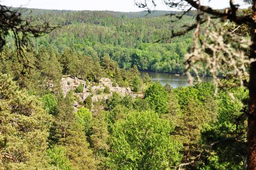 berg_skog